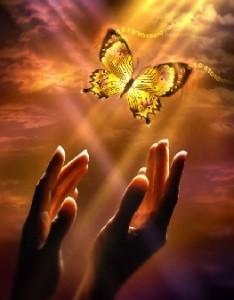 lailla perhosen