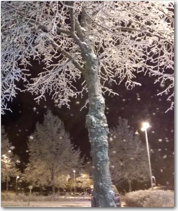huurteinen-puu